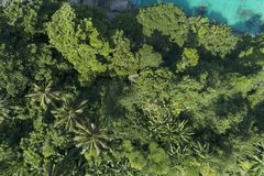 Top view landscape of Beautiful tropical rainforest in summer season image by Aerial view drone shot, high angle view.  royalty free stock images