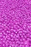 A lawn with purple ageratum flowers texture, background, toned stock photo