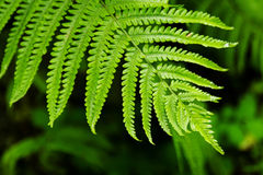 The top view on a leaf of fern on a black-green background. Royalty Free Stock Photos