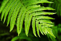 The top view on a leaf of fern on a black-green background. Stock Photos