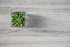 Top view of little green cactus in glass pot on the table Stock Photos