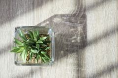 Top view of little green plant in glass pot on the table with light and shadow style Royalty Free Stock Photography