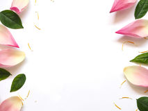 Top view of lotus petals with green leaves and yellow capel on w Stock Images