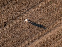 Top view of male farmer flying a drone in field stock photo