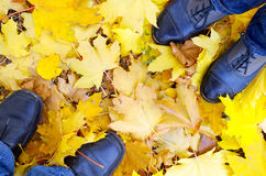 Top view of the male and female feet, standing on the lawn. Covered with fallen autumn yellow maple leaves Stock Image