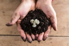 Top view of a man holding a handful of rich fertile soil with a Stock Image