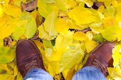 Top view of a man's feet in shoes. Which stands in the autumn lawn covered with yellow fallen leaves linden Stock Photography