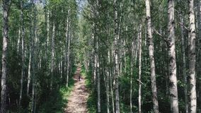 Top view of the man walking in the woods on the path. Clip. Beautiful Sunny summer day in the forest.  Stock Photography