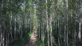 Top view of the man walking in the woods on the path. Clip. Beautiful Sunny summer day in the forest.  Royalty Free Stock Images