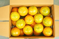 Top view mandarin oranges in brown box,New harvest and fresh from fruit farm stock images