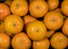 Top view of mandarin oranges Royalty Free Stock Image