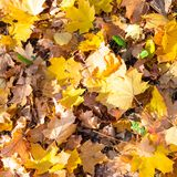 Top view of many fallen leaves on lawn in autumn. Top view of many fallen leaves on lawn in sunny autumn day royalty free stock photo