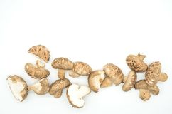 Top view many Mushrooms isolated on white background.  Royalty Free Stock Photography