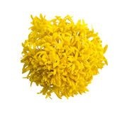 Top view of marigold flower Royalty Free Stock Photography