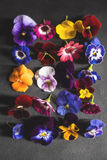 Top view of Mix of edible flowers Stock Photography
