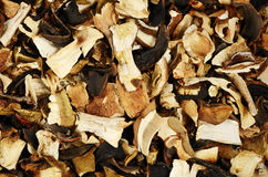 Top view of mixed dried mushrooms Royalty Free Stock Photos