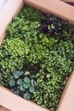 Top view of mixed microgreens Stock Photos