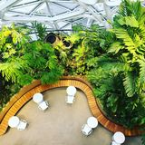 Top view of modern greenhouse architecture. At the Amazon Spheres in Seattle, Washington Royalty Free Stock Image