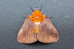 Top view of Moth Stock Images
