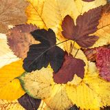top view of natural autumn various fallen leaves Stock Photos