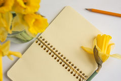 Top view of a notebook and daffodils Royalty Free Stock Photos