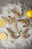 Top View Of Raw Shrimps With Rosemary And Lemon Slices On Crushed Ice Stock Images