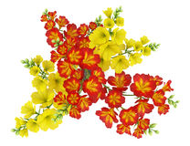 Free Top View Of Red And Yellow Flower In Pot Isolated On White Royalty Free Stock Photo - 28996665