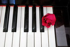 Top View Of Rose On Keyboard Stock Photo