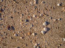 Free Top View Of Sea Shells On The Sand. The Evening Light Of The Sunset Illuminates The Beach With Warm Orange Light. Sea Royalty Free Stock Photography - 194039987