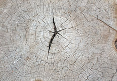 Top view of an old gray texture of a tree trunk Stock Photo