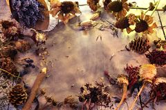 Top view of old grunge paper sheet with dried seeds, flowers, cones and herbs. Magic gothic ritual stock image