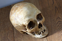 Top-view of an old skull Royalty Free Stock Images