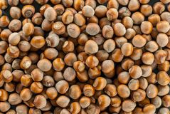 Top view over a pile of hazelnuts. Top view over a pile of raw hazelnuts Stock Images