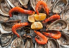 Top view oysters background with Open Oysters with shrimps and l. Emon wedges royalty free stock photo
