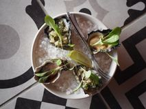 Top view of Oysters on a plate. Fine dining entree at Junction Moama in VIC Australia. Oysters with rock salt on a black and white patterned table Stock Photos