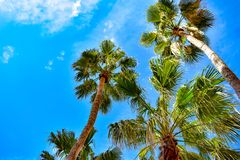 Top view of palm trees on lightblue sky background in St. Pete Beach. stock photos