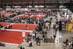 Top view of people and dogs at the international dogs exhibition of Milan, Italy Stock Image