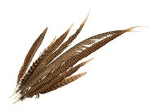 Top view of pheasant tail feathers royalty free stock image