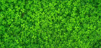 Free Top View Photo Of Clover Leaves Royalty Free Stock Photos - 82930578