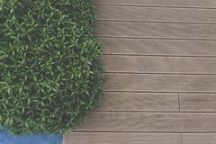 Top view photo, wooden deck floor and greenery tiny leaves stock photo