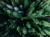 Top View Photography of Pine Tree Royalty Free Stock Images