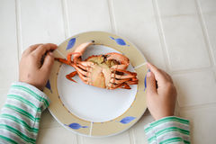 Top view picture of hands and red cooked crab on plate. Exotic vacation. Royalty Free Stock Photo