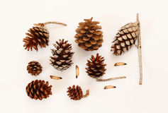 Top view of pine cones on white background Stock Photography
