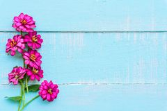 Top view of pink double click cosmos flower stock image