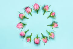 Top view of pink roses arranged in circle over blue background. Abstract floral background. Stock Photo