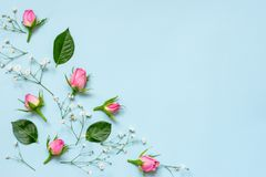 Top view of pink roses and green leaves over blue background. Abstract floral background. Copy space. Stock Photo