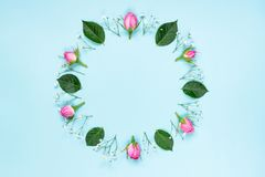 Top view of pink roses and green leaves wreath over blue background. Abstract floral background. Stock Images