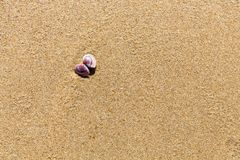 Sea shell on the sand of a beach Royalty Free Stock Photo