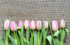 Top view of pink tulips. On a wooden background royalty free stock images