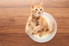 Top view of playful red kitten sitting in clear bucket Stock Image